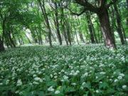 Biljka koja čini čuda za organizam: Nalazi se svuda oko nas, a toga nismo ni svesni!
