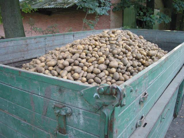 Traži se supervizor magacina krompira: Urnebesan oglas za ovu radnu poziciju, a tek da vidite opis posla!